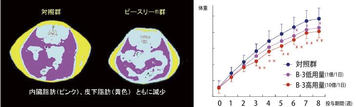 ダイエットビフィズス菌「B-3EX」の肥満抑制効果